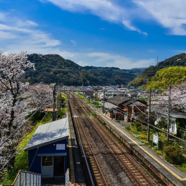 豊後豊岡駅と桜