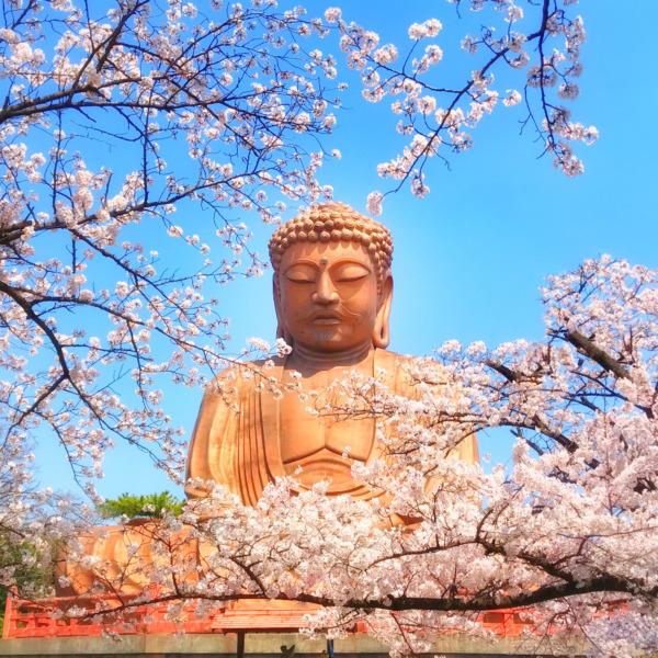 大仏さまと桜
