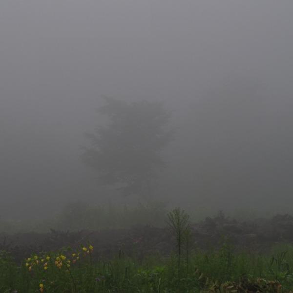 「霧の朝」