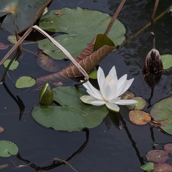 浜名湖ガーデンパーク 5
