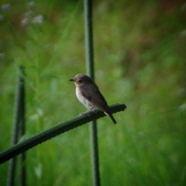 「夕暮れ時の野鳥」