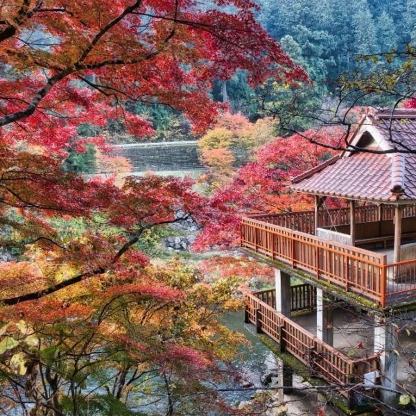 大井平公園の紅葉 2