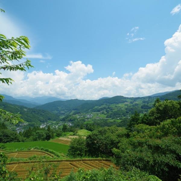 ー里山の風景ー