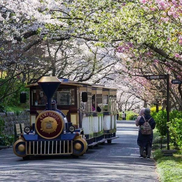 浜松フラワーパークの桜 17