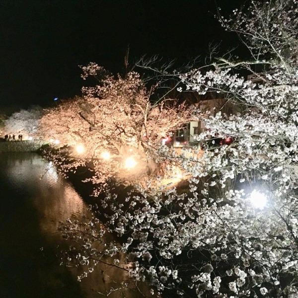 お堀の夜桜