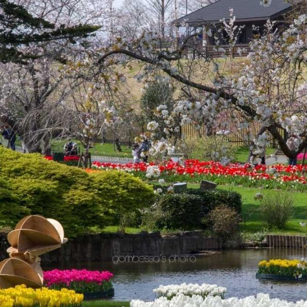 浜松フラワーパークの桜 24
