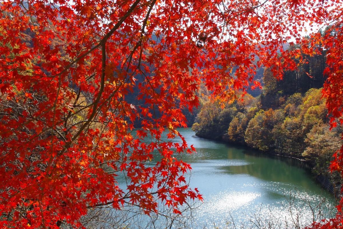 「輝く湖面と紅葉」