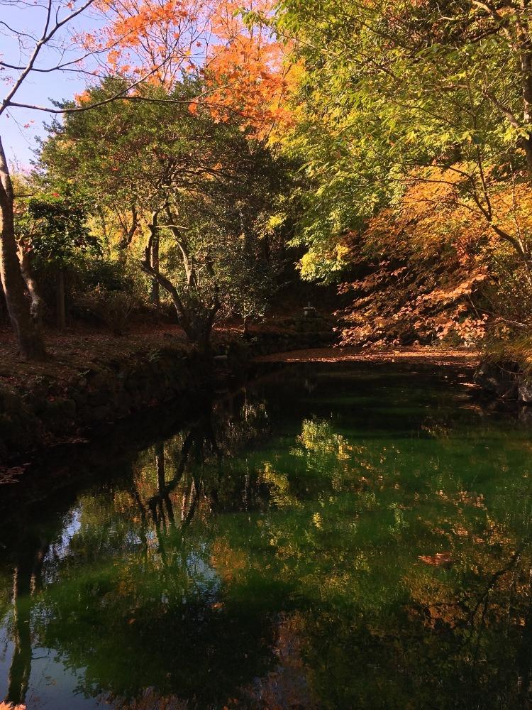 紅葉と緑の池