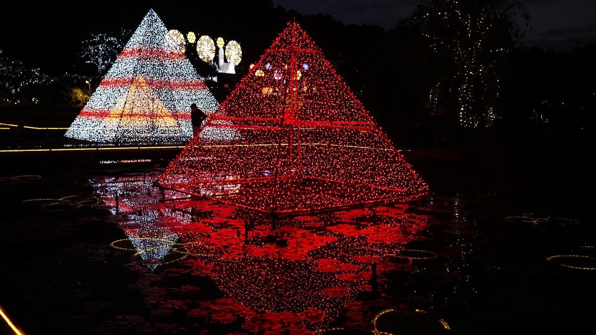 ピラミッドの輝き✨あしかがフラワーパーク