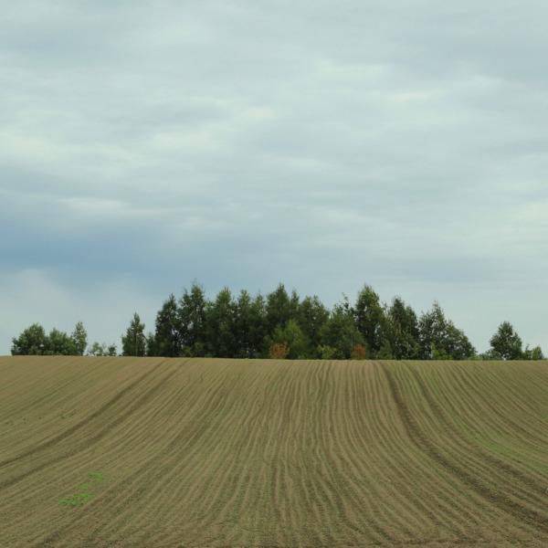 丘の上の小さな森