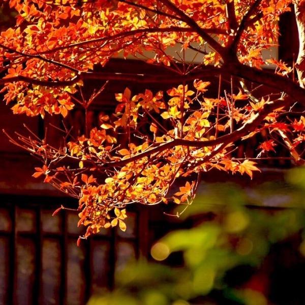 鎌倉 長寿寺の紅葉