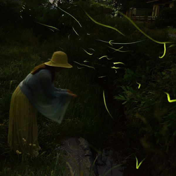 蛍の舞う季節 / Firefly