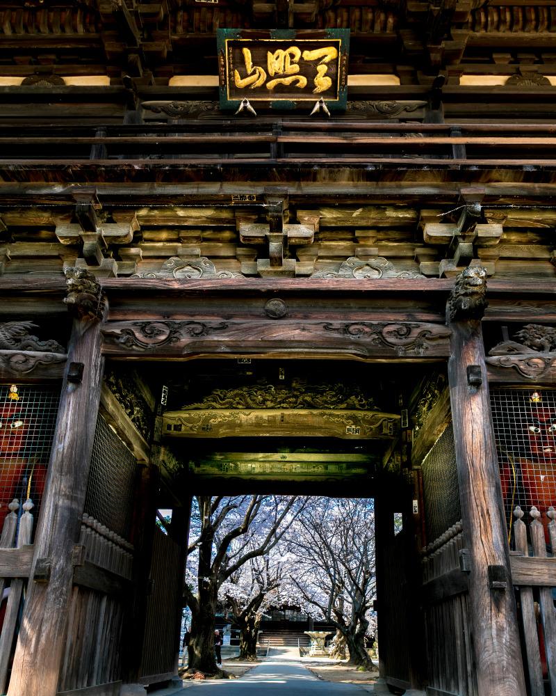 鴻巣 勝願寺仁王門から観える桜