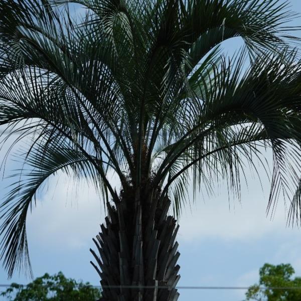 常夏のハワイ気分🆒:行船公園・自然動物園✨