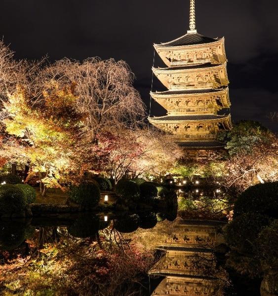 京都 東寺ライトアップ