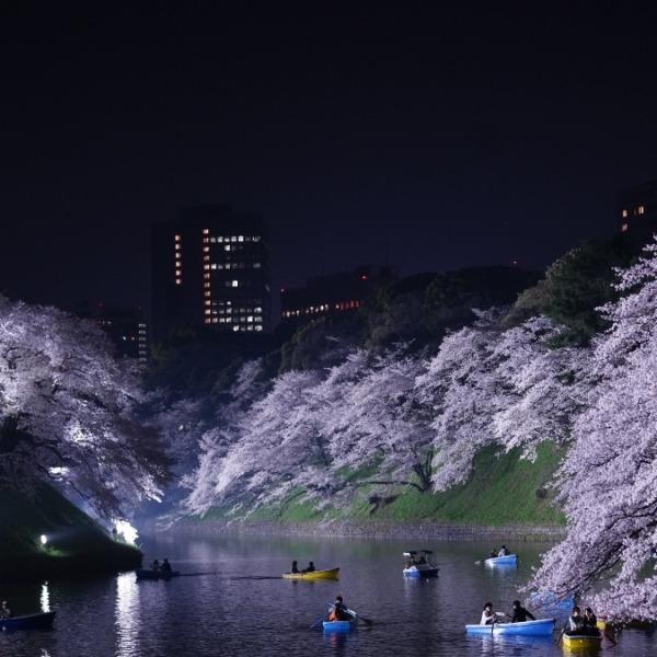 夜桜:千鳥ヶ淵公園(2019回顧編)/水上で心弾む✨