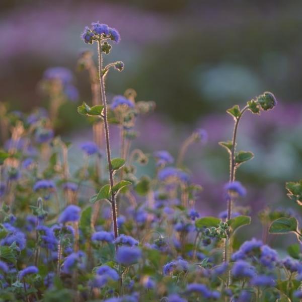 初秋の漂い:葛西臨海公園_デザイン花壇💖