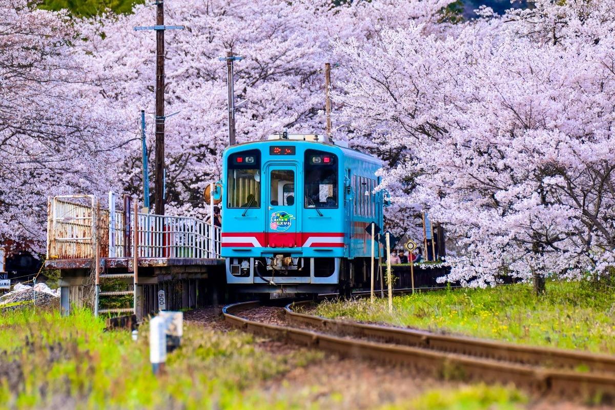 桜満開のトンネル