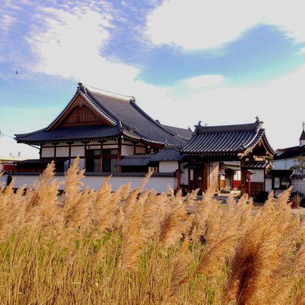すすきと日本家屋
