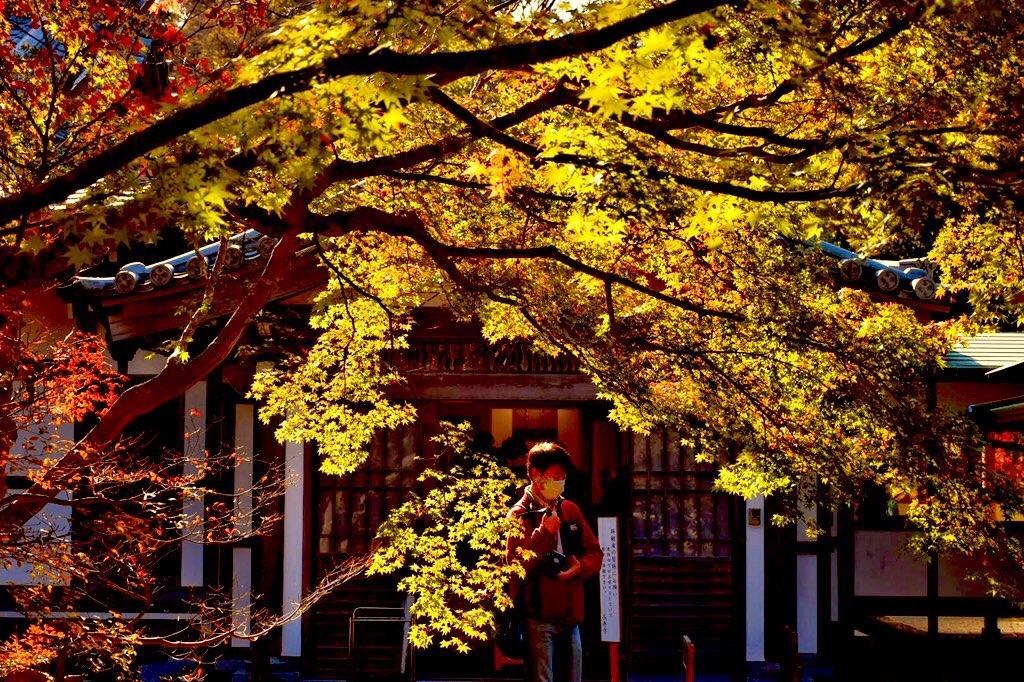 長寿寺の黄葉