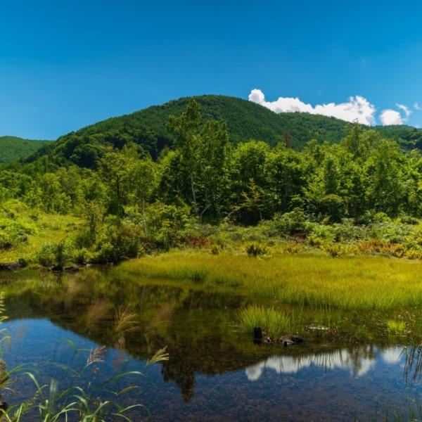 夏の乗鞍高原偲ぶの池