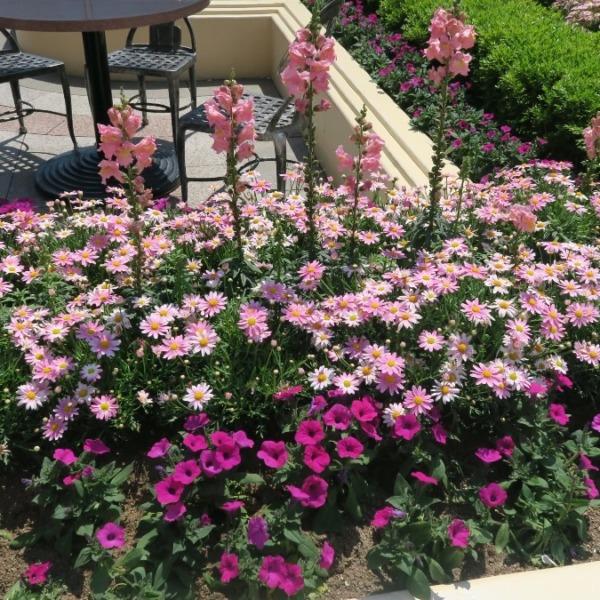 USJの想い出✨園内はお花も綺麗💖彩