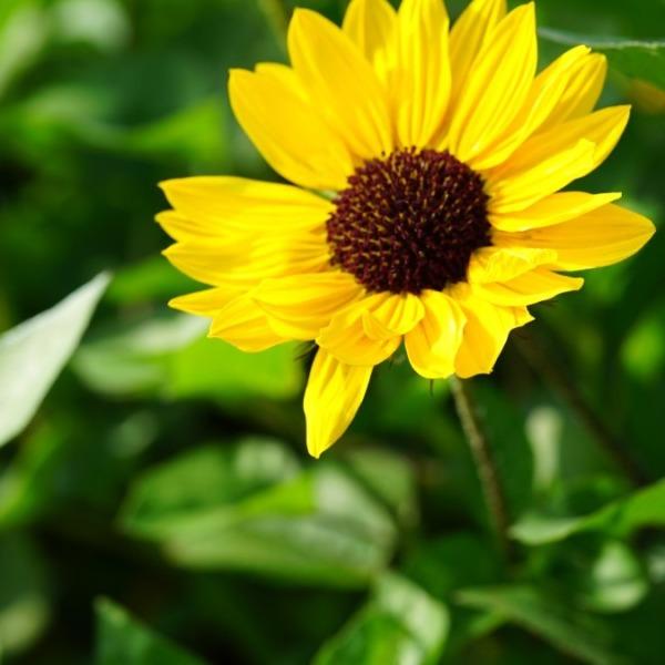 ひまわり2020🌻/葛西臨海公園:夏の訪れ✨