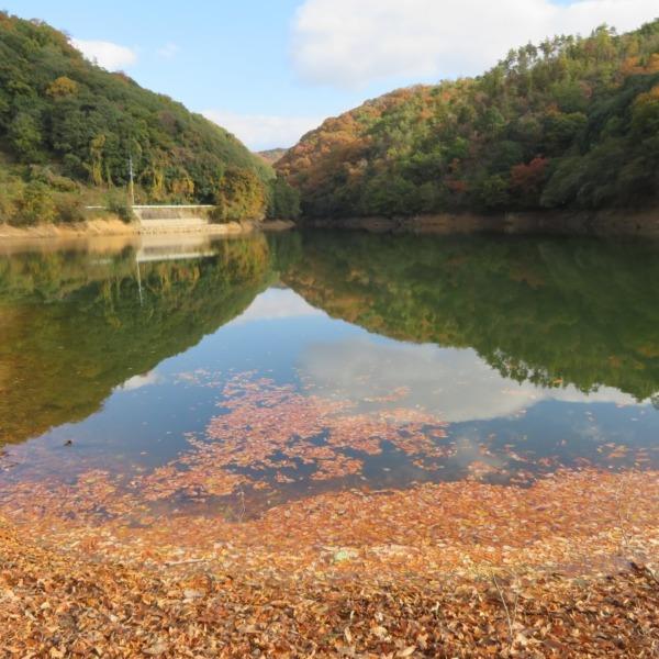 杉谷ダムの水鏡の杉谷富士と紅葉