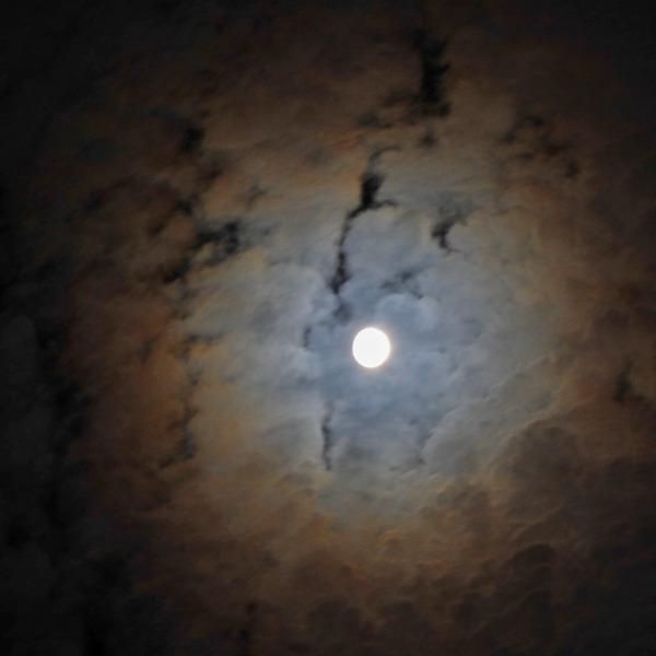 庭からの月
