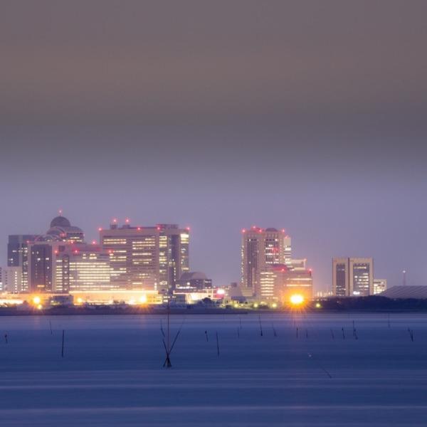 東京湾での養殖