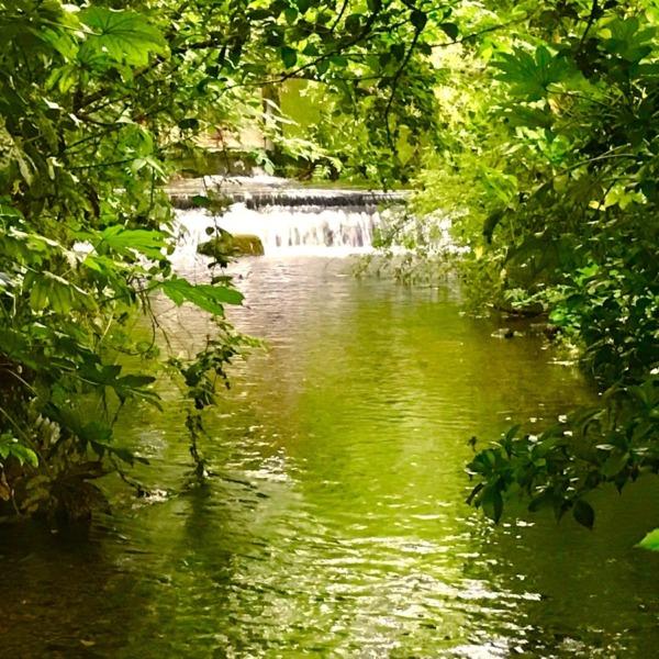 湧水の雑木林