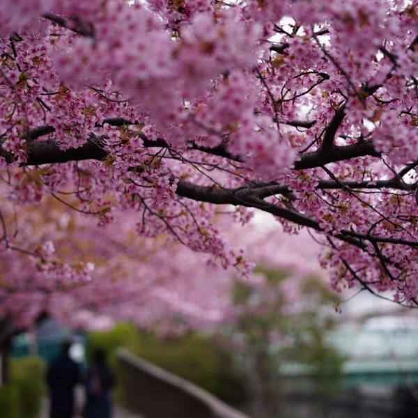 ピンクのトンネル:二人三脚/歓びも悲しみも_永遠の絆✨