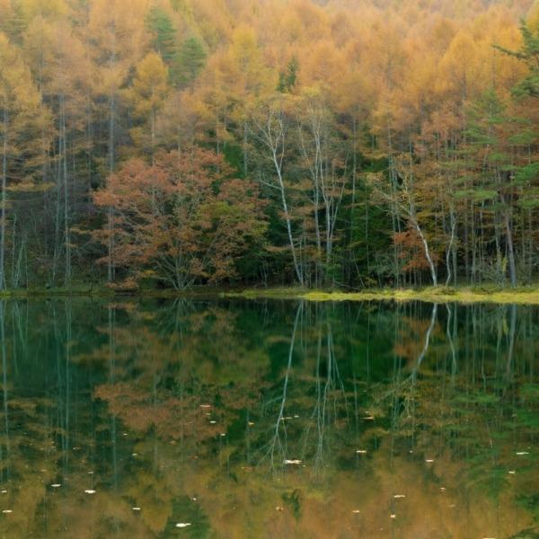 早朝の御射鹿池秋の紅葉リフレクション