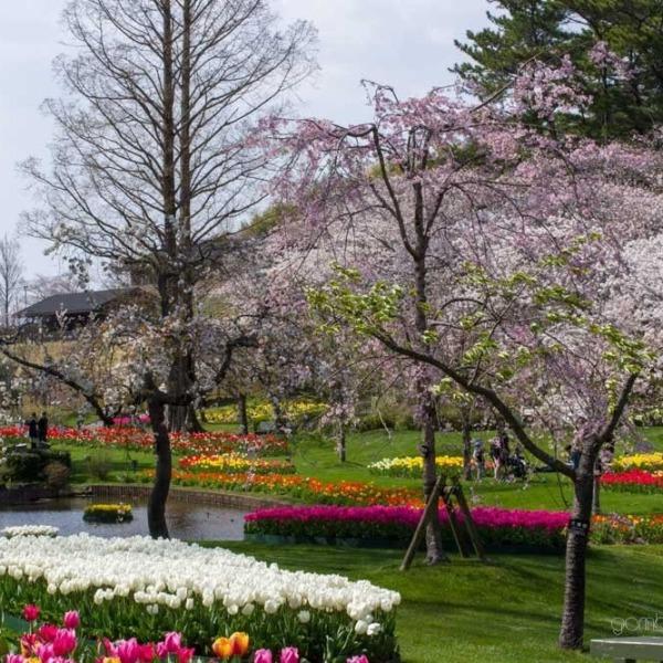 浜松フラワーパークの桜 29