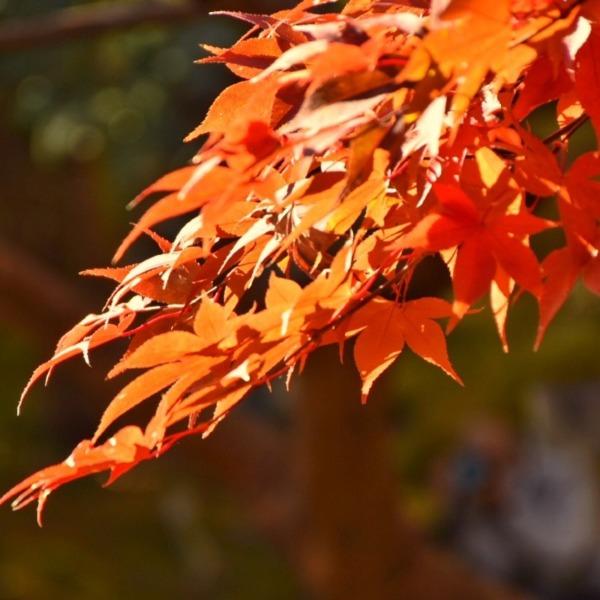 長寿寺の紅葉 2