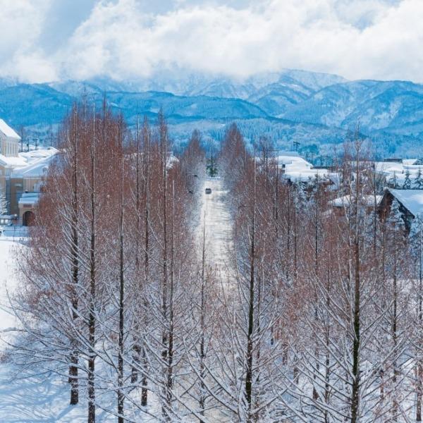 冬の『冬ソナ並木』