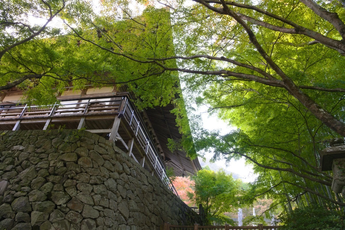 両子寺の緑葉