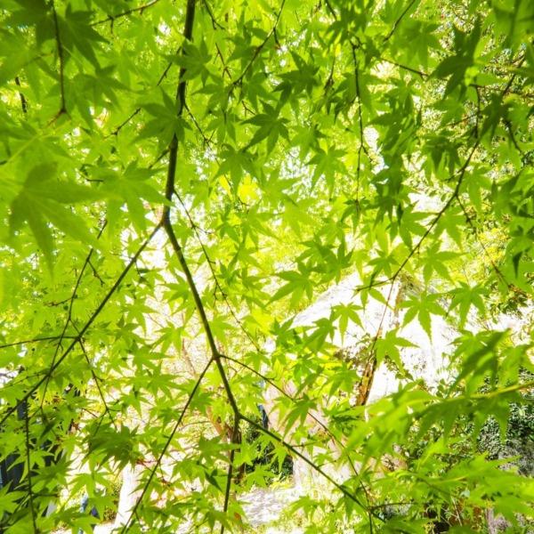 深緑の気配