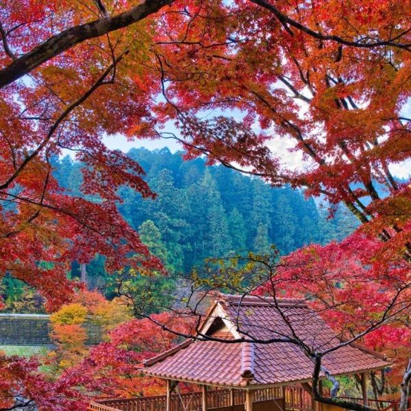 大井平公園の紅葉 3
