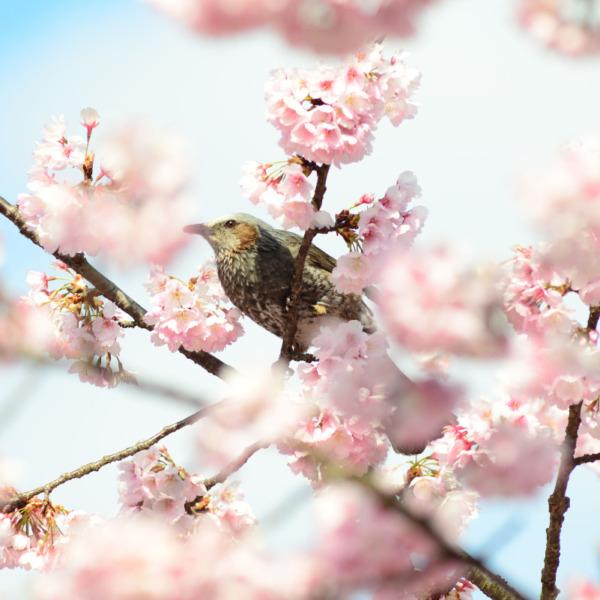 春を迎える喜び