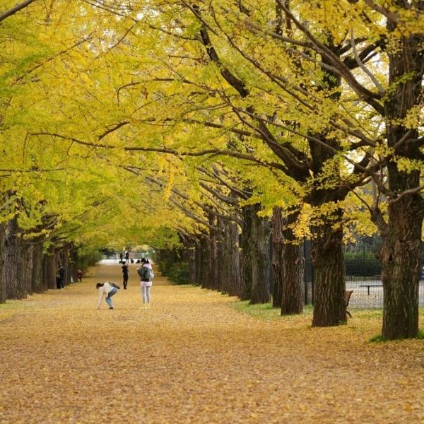 昭和記念公園(回想編):早く自由に散歩したい✨