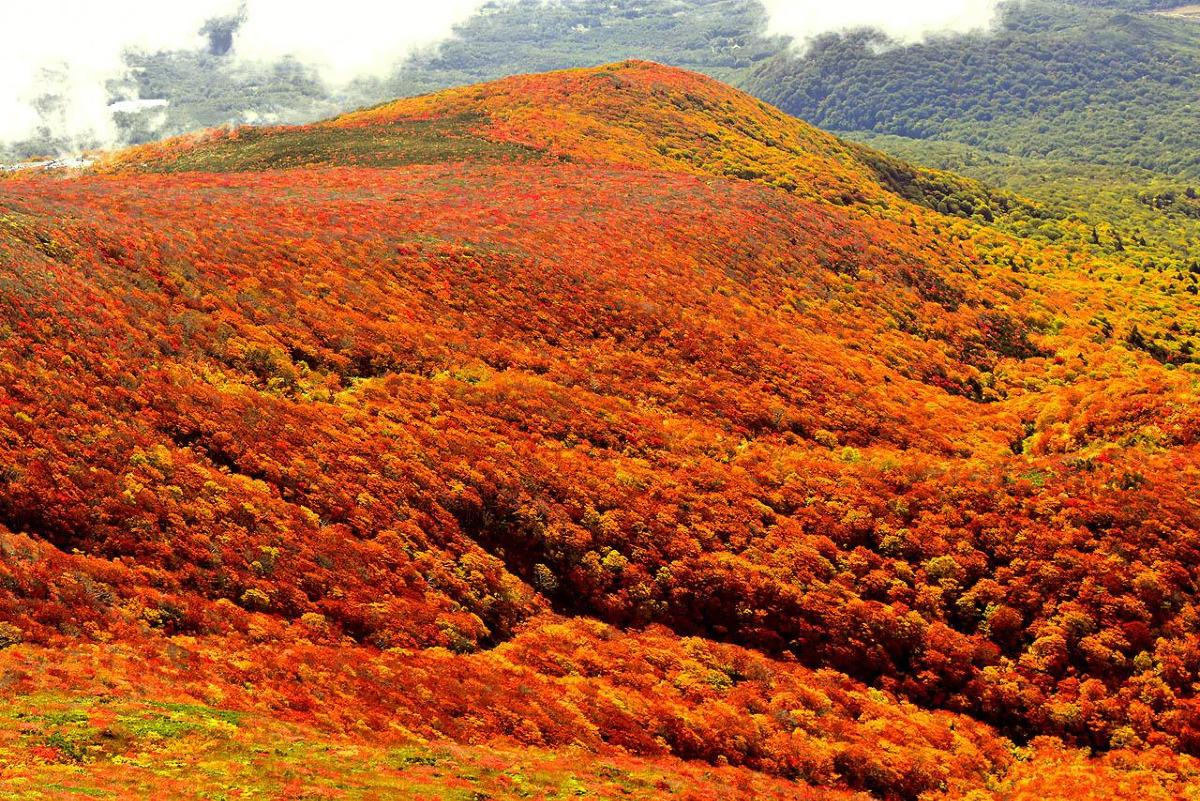 栗駒山に広がる紅葉絨毯