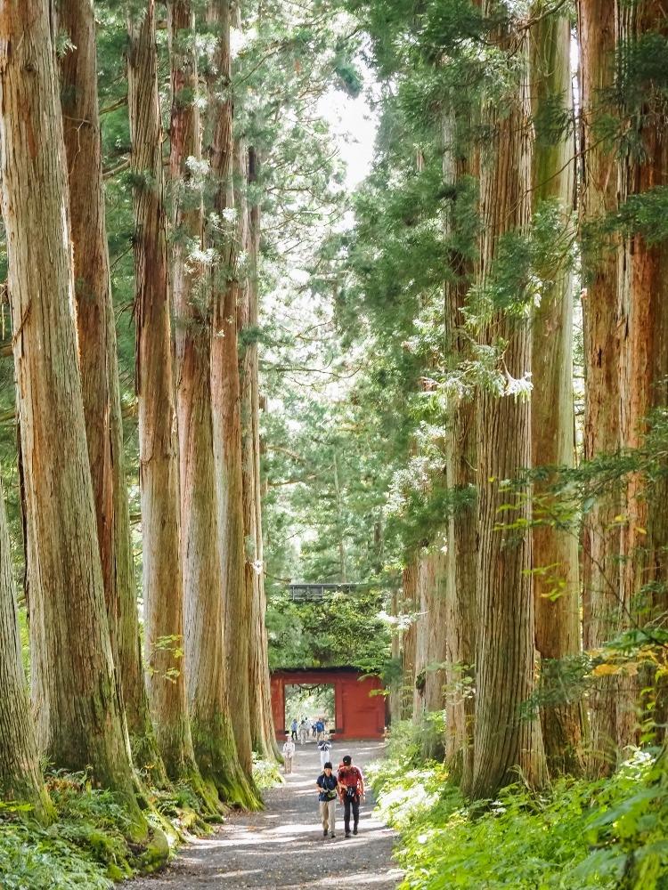 戸隠神社奥社山門