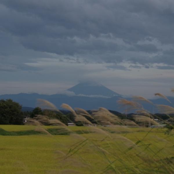 「夕暮れ時のススキと富士山」