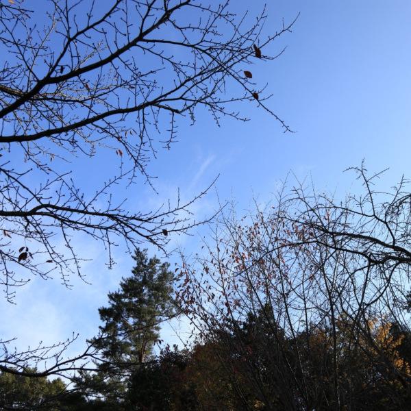 秋の終、冬の始
