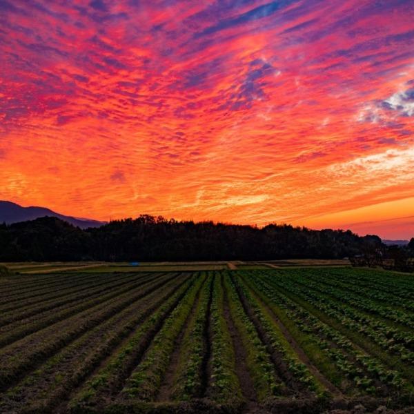 田園の夕焼