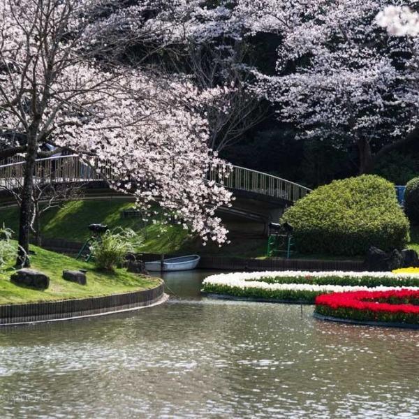 浜松フラワーパークの桜 31