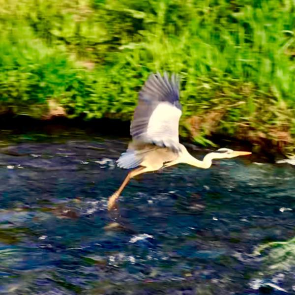 湧水、飛翔
