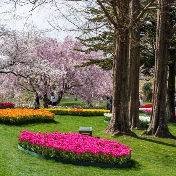 浜松フラワーパークの桜 32