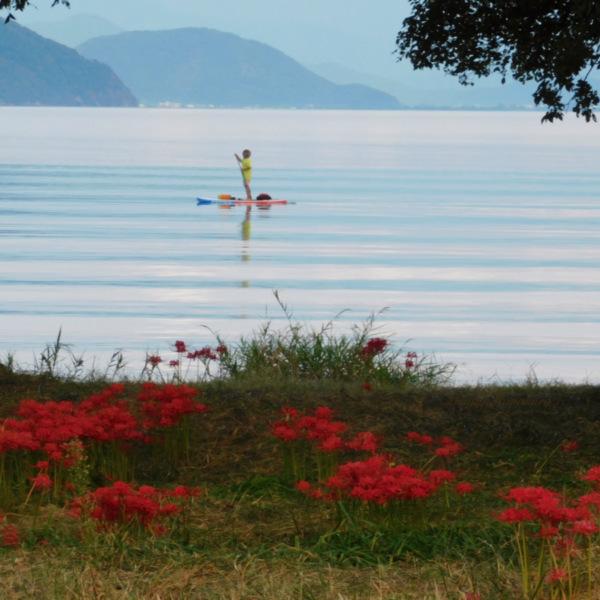 琵琶湖/彼岸花風景